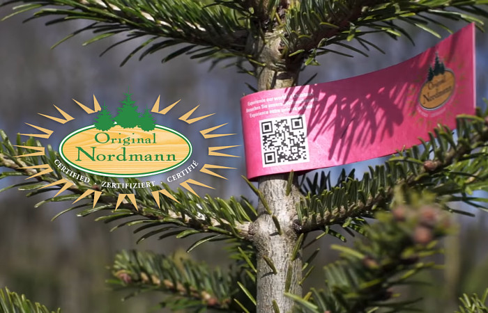 Original Nordmann kerstbomen